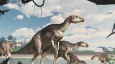 Scoperta una nuova specie di dinosauro in Australia, il Fostoria