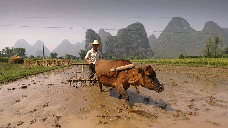 Capodanno cinese, il 12 febbraio inizia l'anno del Bue