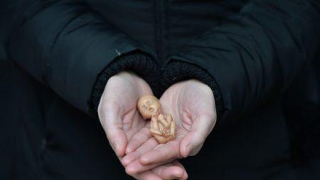 Fermare la «coltivazione fetale» umana prima che inizi
